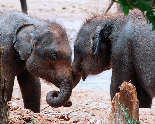 notre-histoire-elephant-koshi